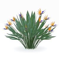 strelitzia reginae flowering plant max