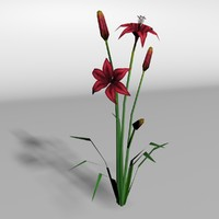 blackout lily 3d max