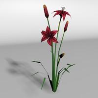 Blackout lily