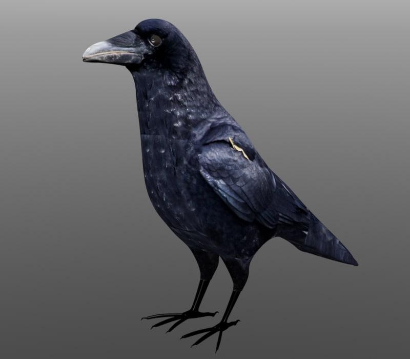 3d model crow formats