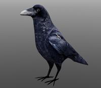 Crow (FBX & XLO format)