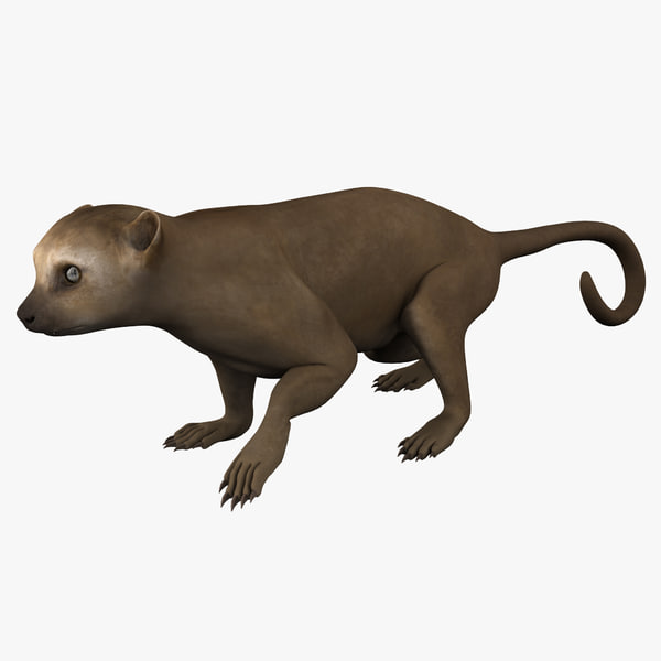 3d model kinkajou pose 1