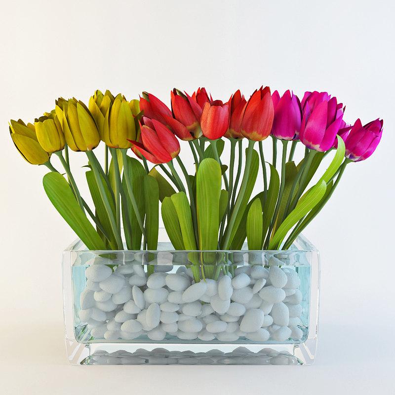 max tulip