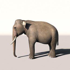 elephant 3d max