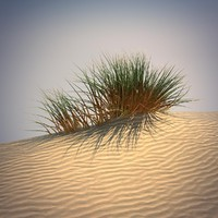 3d desert grass set