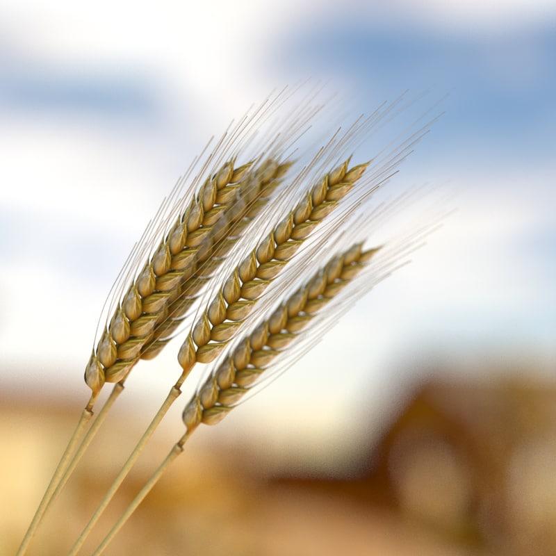 summer wheat 3d fbx