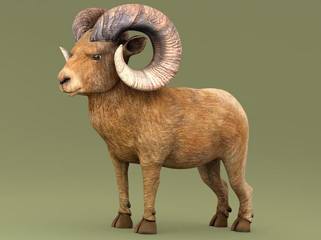 ram horns 3d model
