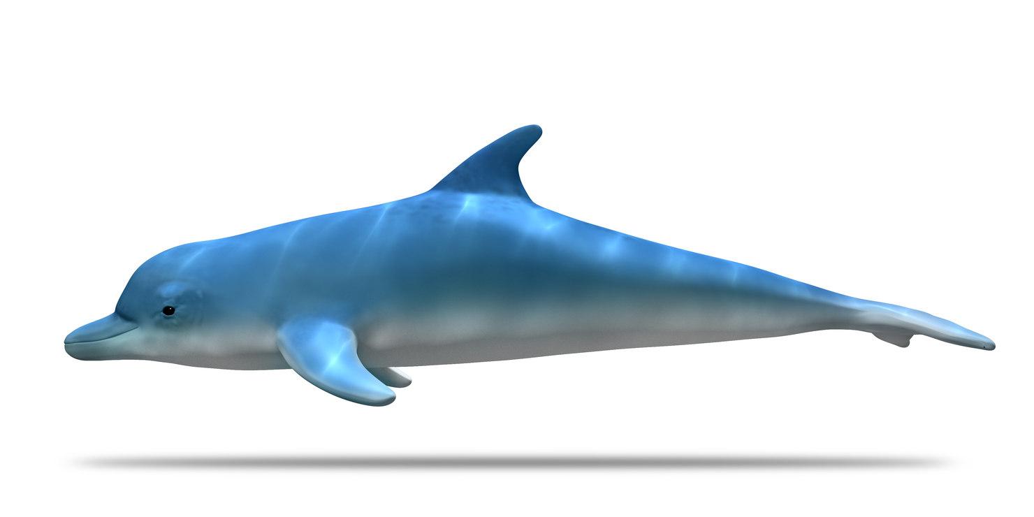 dolphin ma