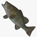 Mounted Fish 3D models