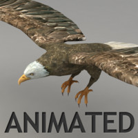 rigged flying eagle animation 3d model