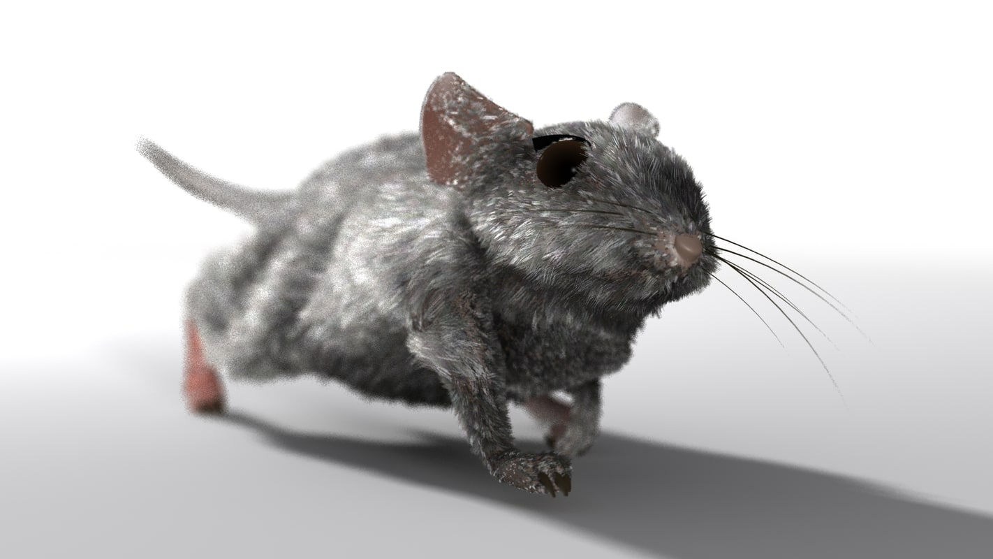 mouse hair fur 3d model
