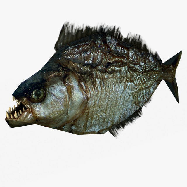 piranha 3d model