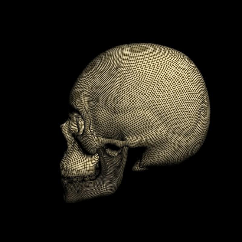 3d obj realistic skull