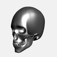 3d metallic human skull model