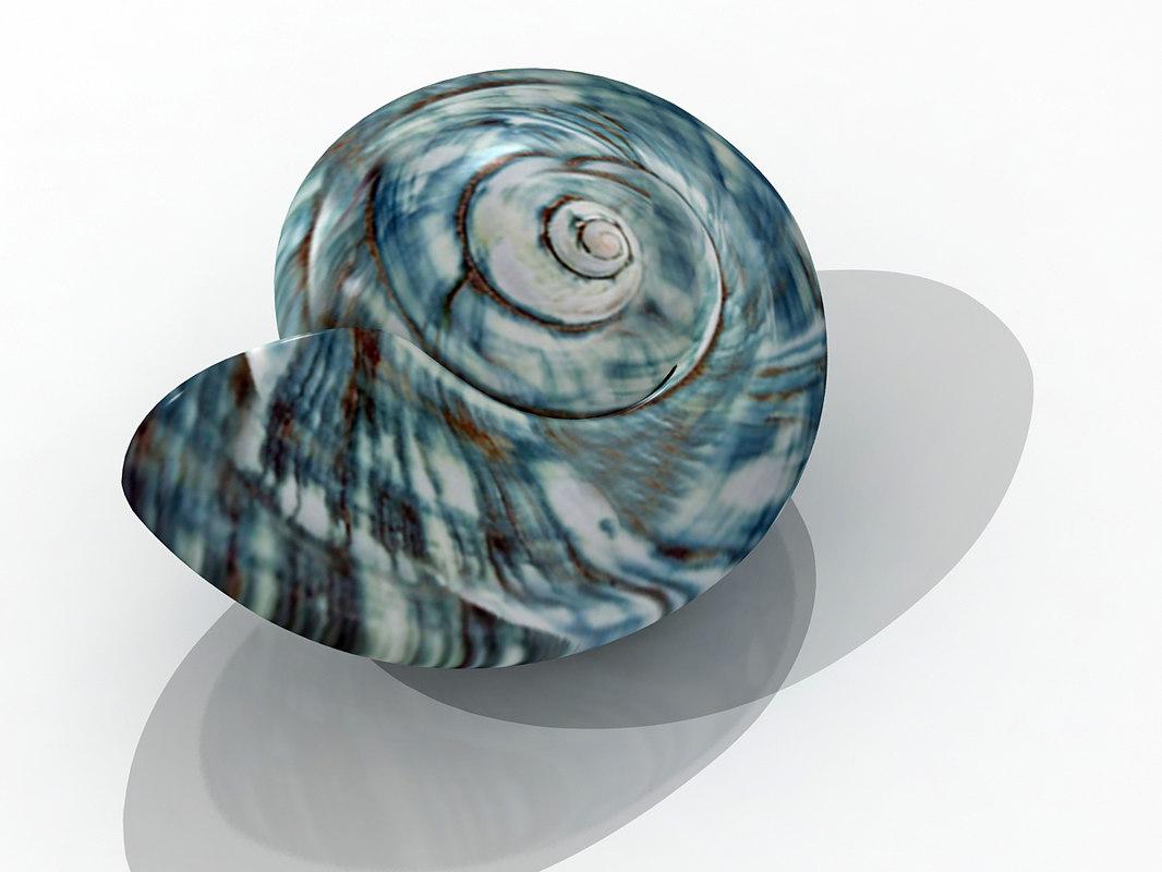 3d model seashell shell