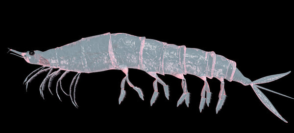 krill animations max
