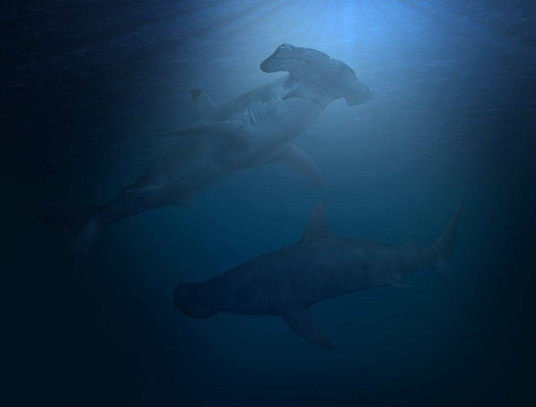3d model shark sealife