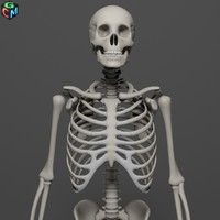Skeleton HD