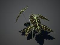 Tropical plant(1)