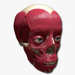 anatomical bones muscles 3d c4d