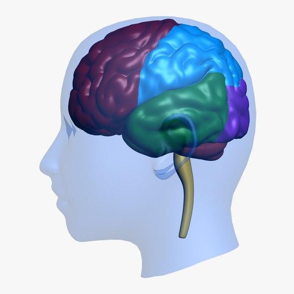 brain head education 3d obj