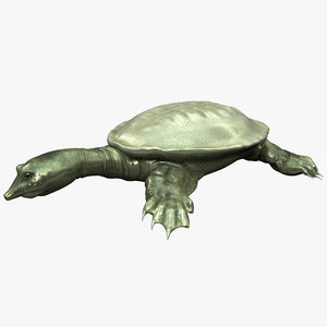 3ds max chinese softshell turtle