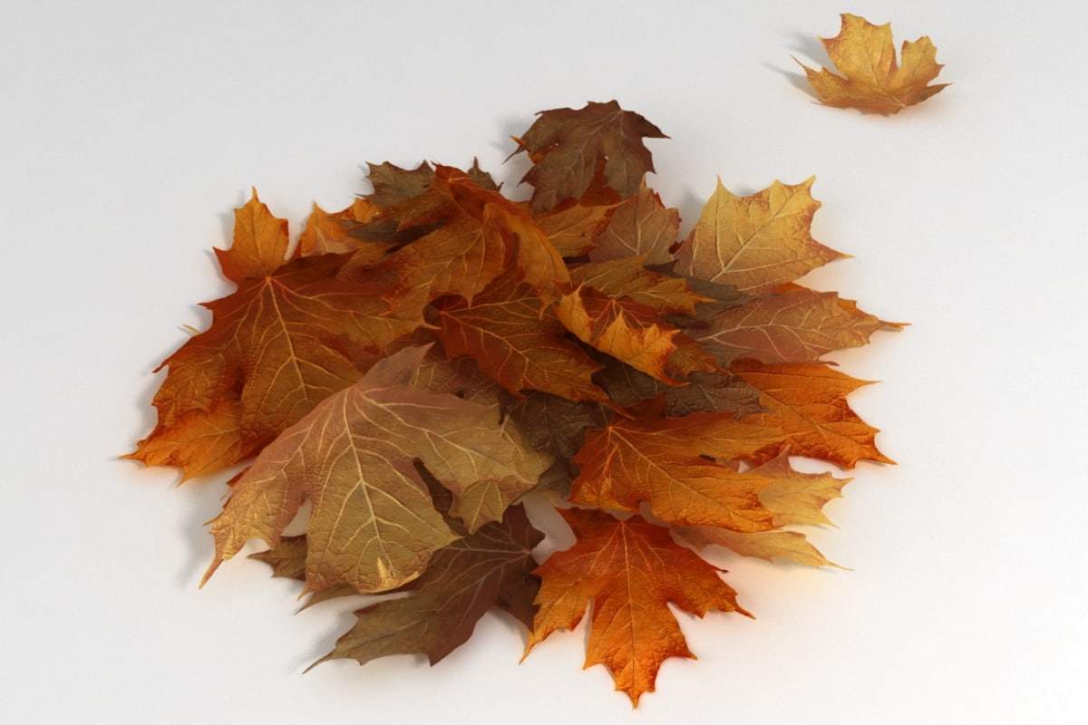 3dsmax autumn leaves