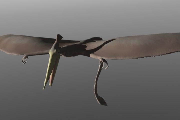 pterosaur 3d model