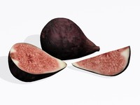 3d figs model