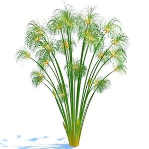 cyperus papyrus 3d 3ds