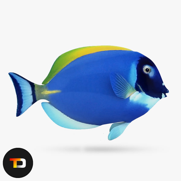 3ds max blue sea fish