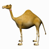 3d max camel cartoon rigged