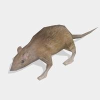 3d rat animal model