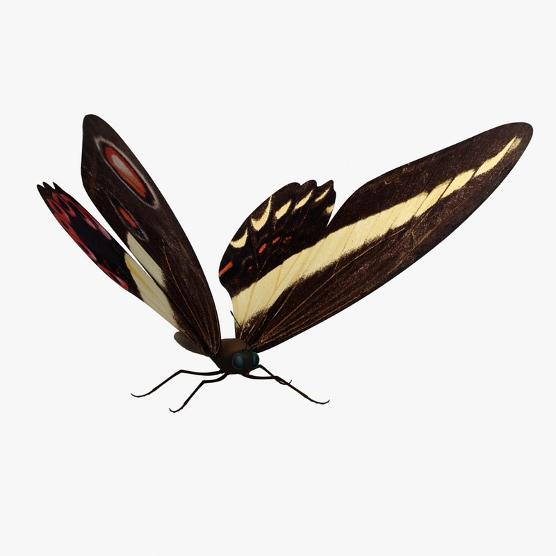 3ds max butterfly fly