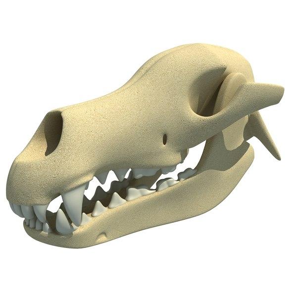 dog skull skeleton 3d max