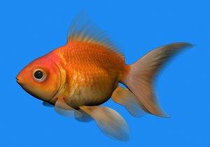 fish goldfish 3d model