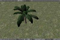 maya banana tree