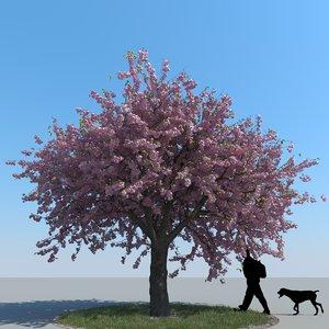 max realistic cherry tree