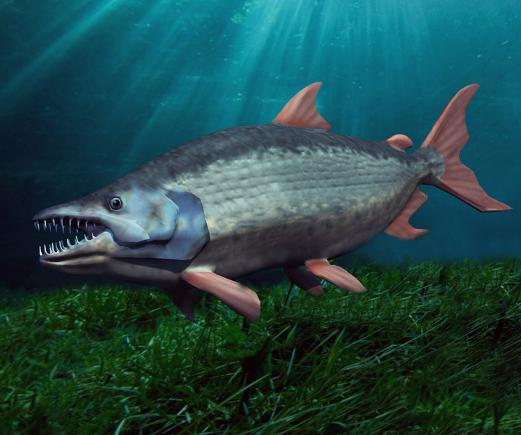 3d model giant tigerfish fish