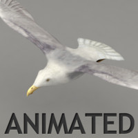 Lowpoly animated seagull