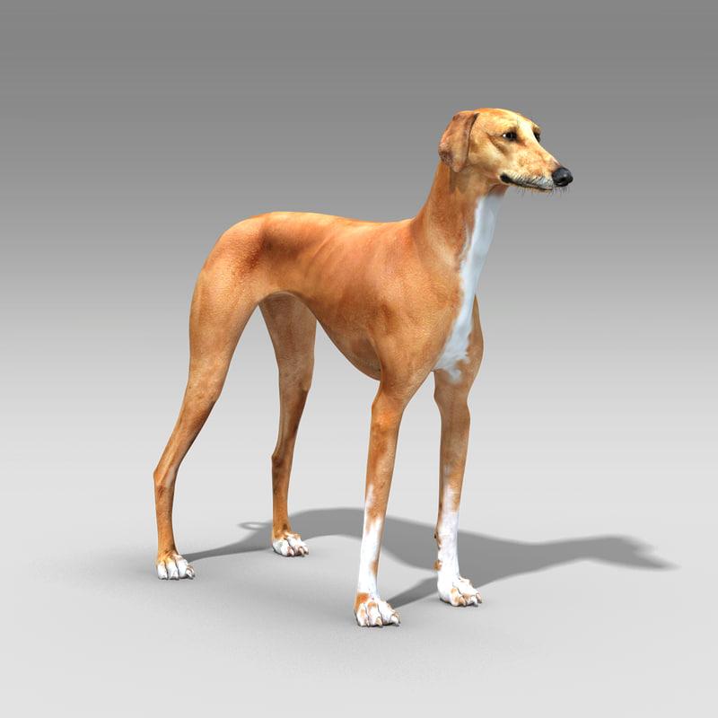 azawakh dog 3d max