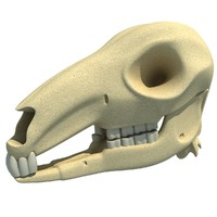 3ds kangaroo skull skeleton