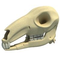 3ds kangaroo skull skeleton