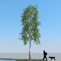 3d realistic birch tree model