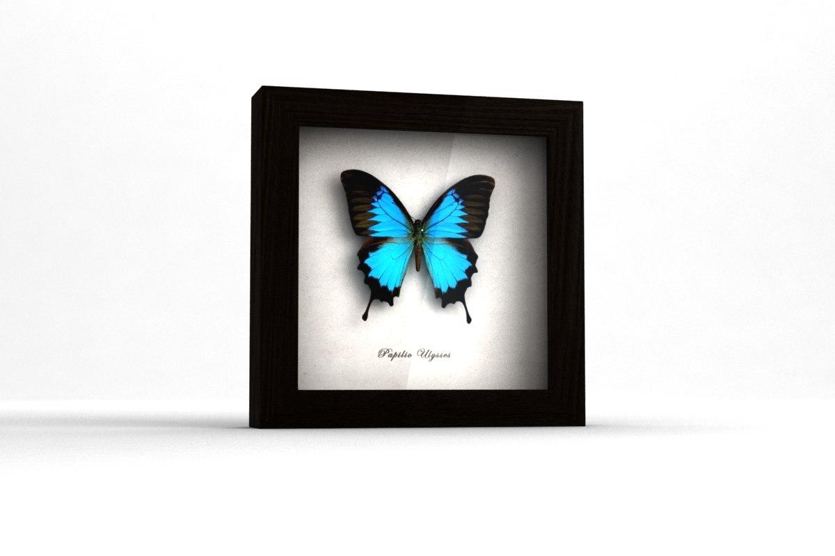 3d butterfly shadow box model