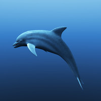 dolphins model