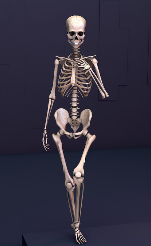 3d rigged human skeleton