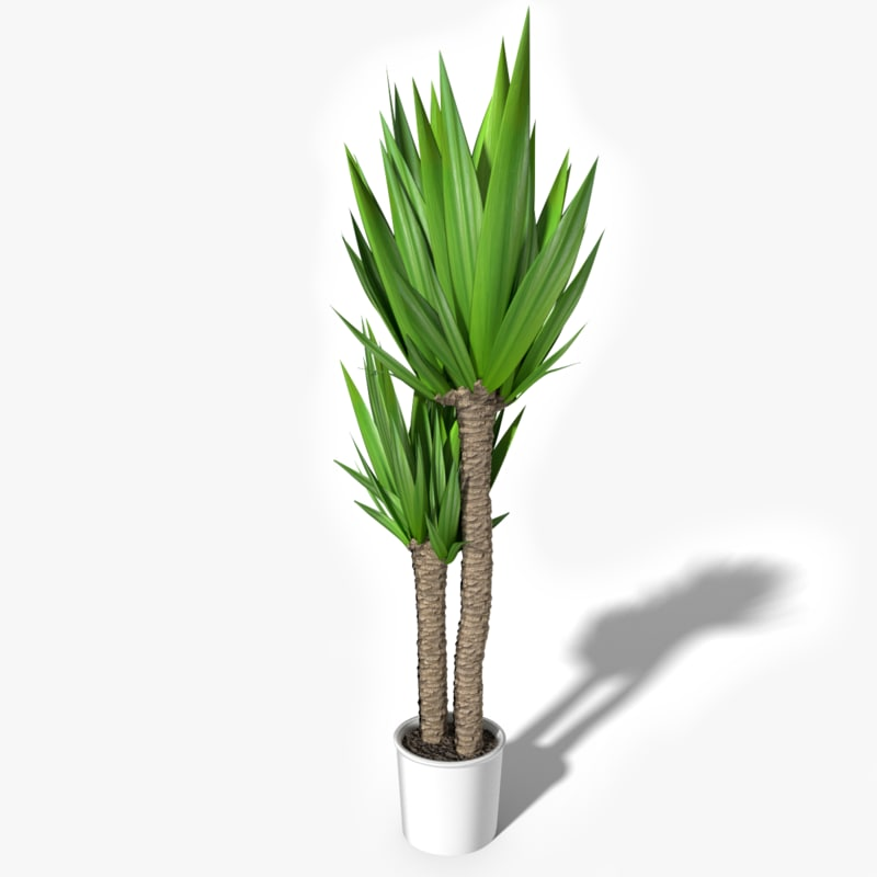 tropical house plant 3d max