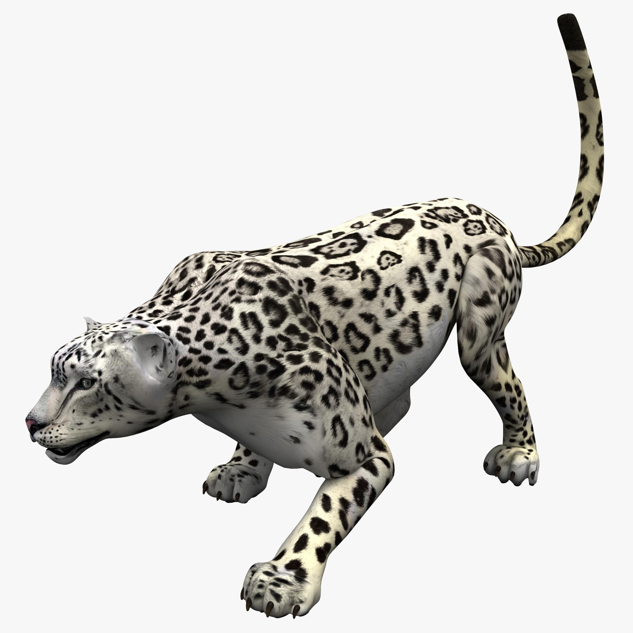snow leopard pose 1 3d model