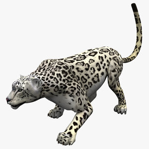 snow leopard pose 1 3d model